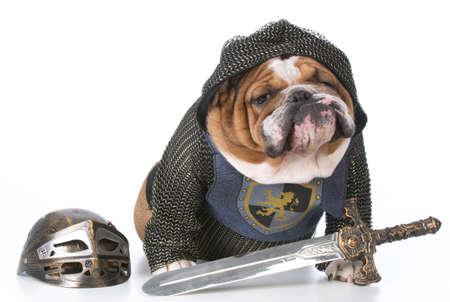 bulldog dressed up like a knight on white background