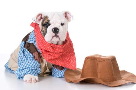cute english bulldog puppy wearing western cowboy costume on white background Stock Photo