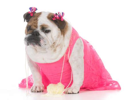 female bulldog wearing pink dress on white background