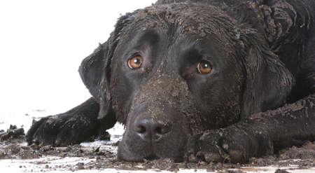 perro fangoso sucia que coloca en el fondo blanco