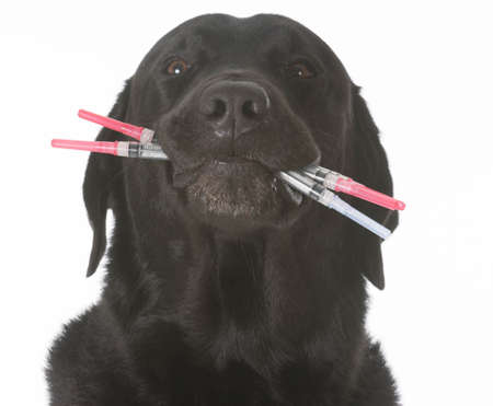 dog holding a mouthful of syringes - concept of over vaccination