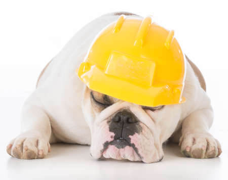 working dog sleeping on the job