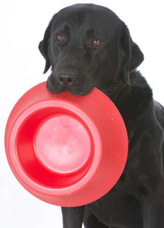 dog holding an empty bowl begging to be fed Banco de Imagens