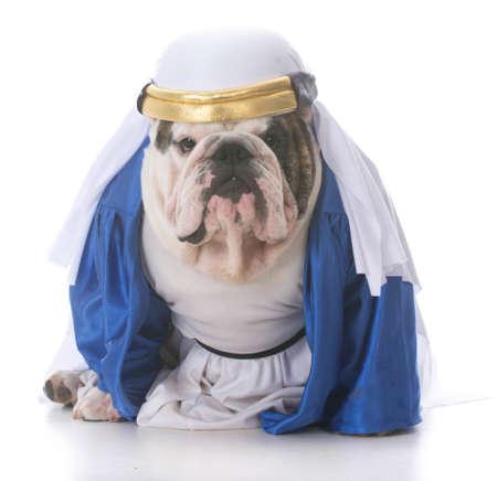 dog wearing a shiek costume on white background