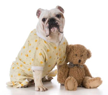 bulldog wearing pajamas sitting beside stuffed teddy bear Stock Photo