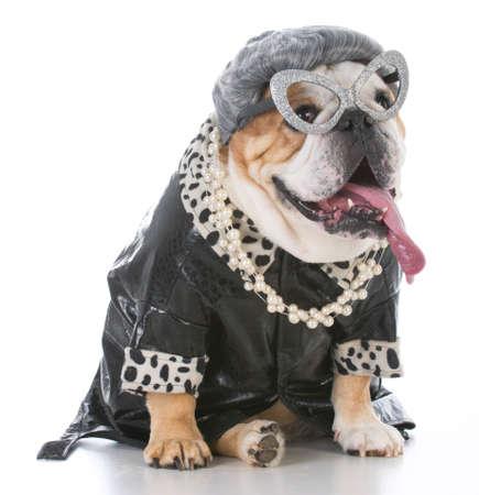 senior female bulldog wearing womans clothing and wig on white