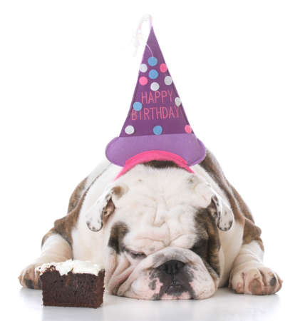 bulldog wearing birthday hat with piece of cake isolated on white background Banco de Imagens