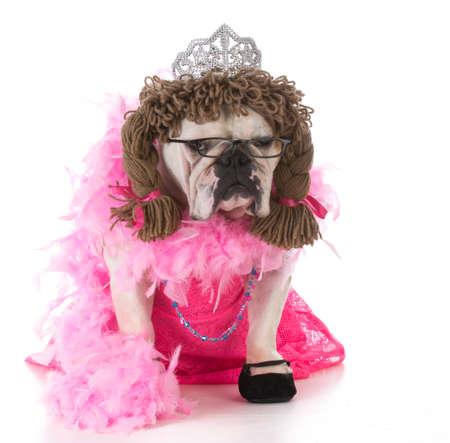 female bulldog wearing pink dress sitting on white background