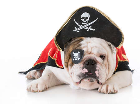 dog dressed up like a pirate on white background