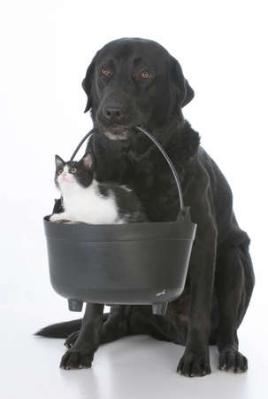 dog holding a caldron with a kitten inside Banco de Imagens