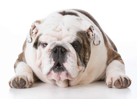 dog with funny expression on white background