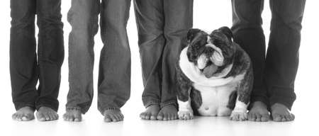bulldog sitting between the legs of her family