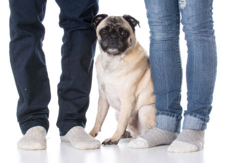 mixed breed dog sitting at the feet of his owners on white background Banco de Imagens