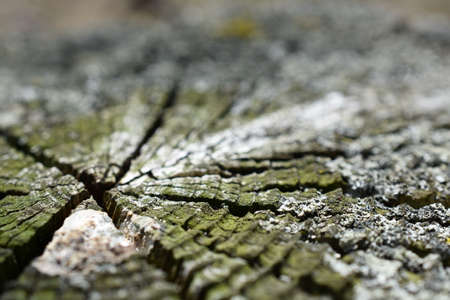 Mossy Stump Macro