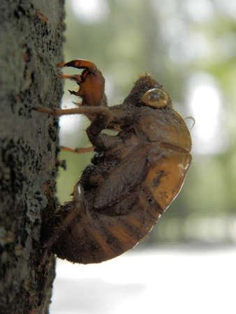 Shell of Beetle