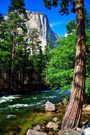 El Capitan is a 3,000 foot vertical rock formation in Yosemite Valley and Yosemite National Park. It is one of the most popular monoliths with rock climbers in the world.  Stock Photo - 614156