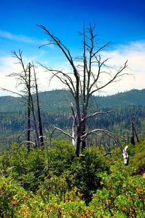 El Valle de Yosemite Parque Nacional Yosemite, California Foto de archivo - 614117