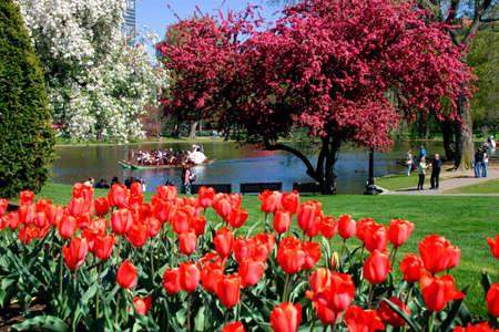 boston common: View of Boston Public Garden in spring