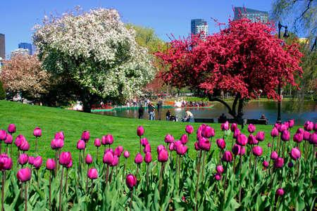 View of Boston Public Garden in spring  스톡 콘텐츠