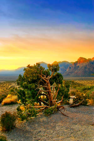 The Red Rock Canyon National Conservation Area is located just a few miles west of Las Vegas and encompasses 197,000 acres within the Mojave Desert.  Red Rock is an  area of world wide geologic interest and beauty. The most significant geologic feature of Stock Photo - 622658