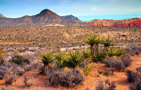 The Red Rock Canyon National Conservation Area is located just a few miles west of Las Vegas and encompasses 197,000 acres within the Mojave Desert.� Red Rock is an� area of world wide geologic interest and beauty.�The most significant geologic feature of Stock Photo - 622656