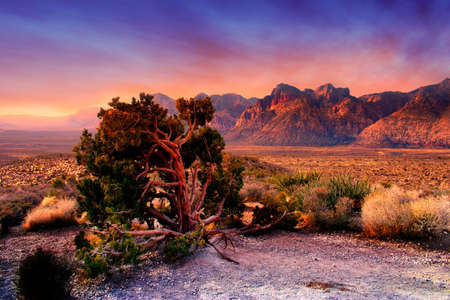 The Red Rock Canyon National Conservation Area is located just a few miles west of Las Vegas and encompasses 197,000 acres within the Mojave Desert. Red Rock is an area of world wide geologic interest and beauty.The most significant geologic feature of