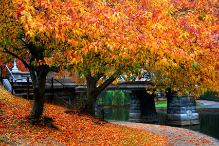 Autumn in Boston Public Garden, Massachusetts, USA   photo