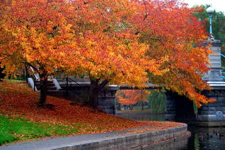 Herfst in Boston Public Garden, Massachusetts, Verenigde Staten