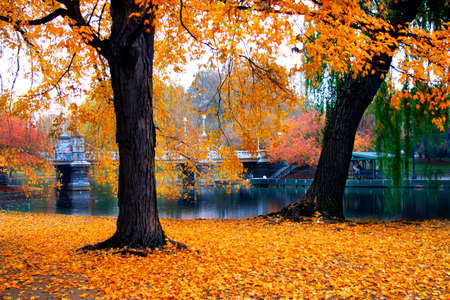 Autumn in Boston Public Garden, Massachusetts, USA