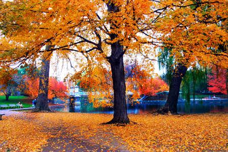 Autumn in Boston Public Garden, Massachusetts, USA   photo