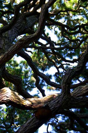 Japanese tea garden at Golden Gate Park, San Francisco, California Stock Photo - 686178