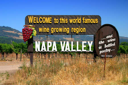 napa valley: Vineyard at Sonoma and Napa Valley, California   Stock Photo