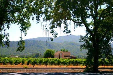 Vineyard at Sonoma and Napa Valley, California   Stock Photo