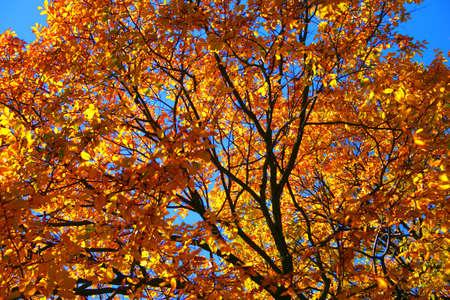 boston common: Fall foliage at the Boston Common and Public Garden