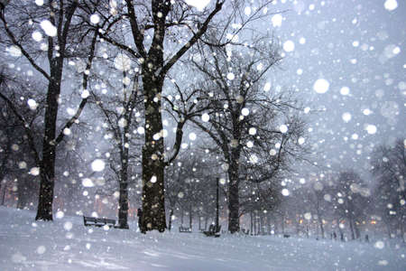 the common: Stock image of a snowing winter at Boston, Massachusetts, USArn