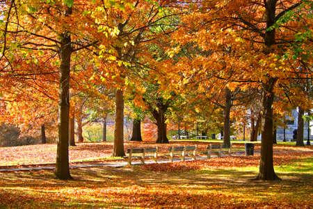 Stock image of fall foliage at Boston Public Garden