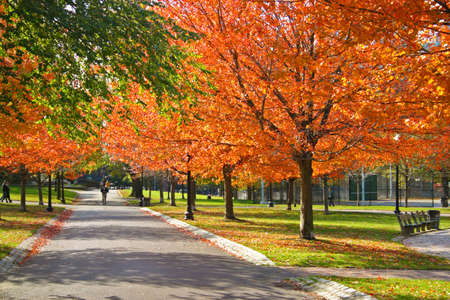 public park: Stock image of fall foliage at Boston Public Garden