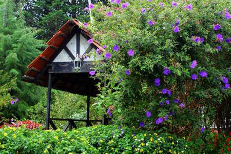 english village: A traditional English cottage   Stock Photo