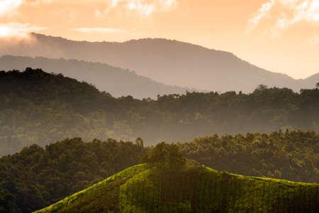 Tea plantation at the Cameron Highland, Malaysia Stock Photo - 5536859