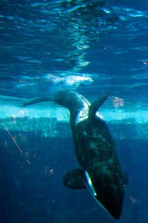 Stock image of killer whale Stock Photo - 5596485
