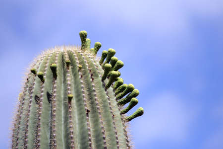 Stock image of Saguaro National Park, USA   photo