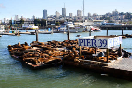 sea dock: Sea lions at Pier 39, San Francisco, USA   Stock Photo