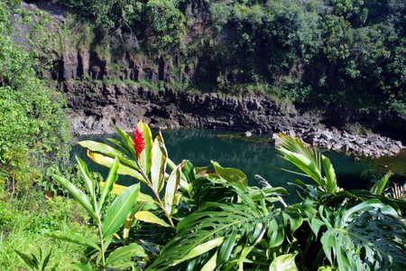 Rainbow Falls is a waterfall located in Hilo, Hawaii.   photo