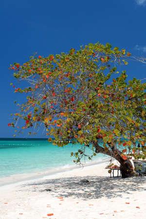 Negril, Jamaica   photo