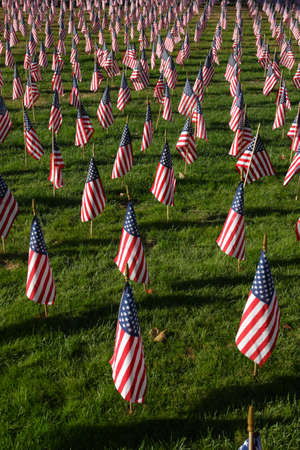veterans day: Field of American Flags    Stock Photo