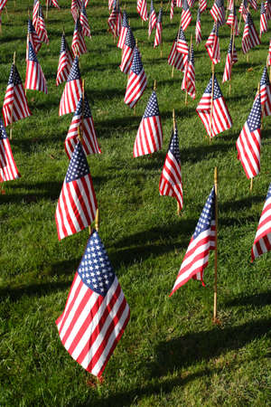 american flags: Field of American Flags    Stock Photo