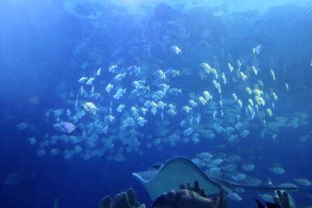 cano: Big indoor aquarium with selection of different marine animals Stock Photo