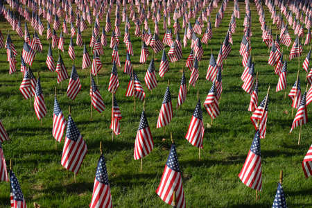american flags: Field of American Flags Editorial