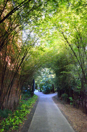 both sides: A path with dense bamboo groves on both sides