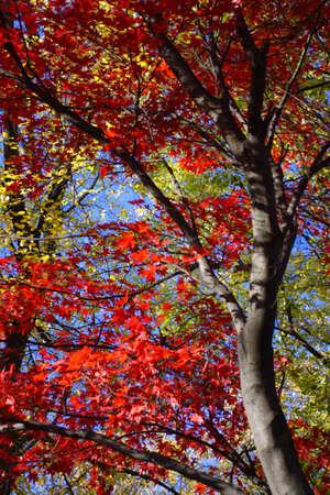 fall foliage at Boston